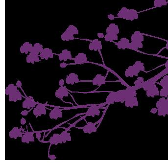 Branche droite